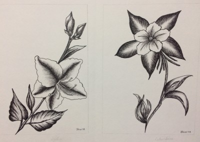 Les jolies fleurs (Jeannita A.)